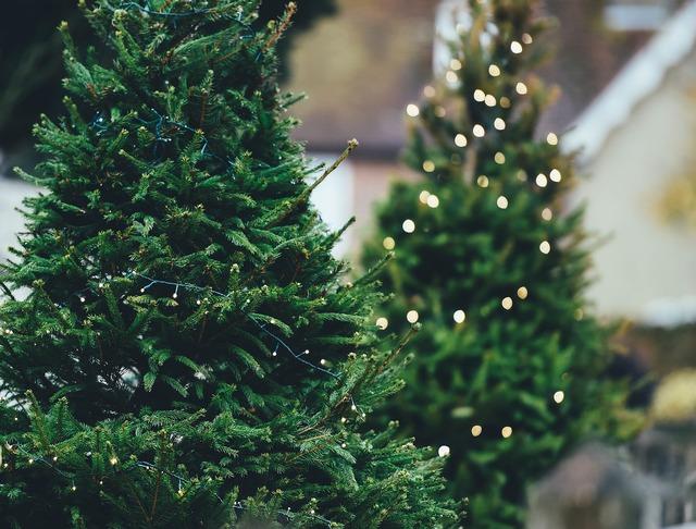 Christmas tree pine tree christmas lights, religion.