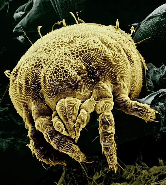 Citrus yellow mite macro electron microscope, food drink.