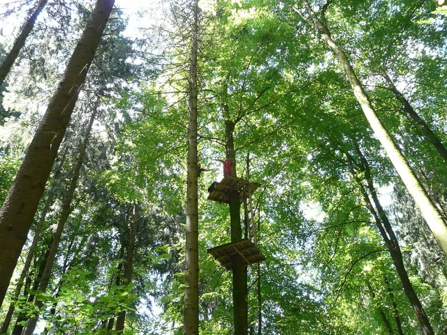 Climbing forest high ropes course climb, nature landscapes.