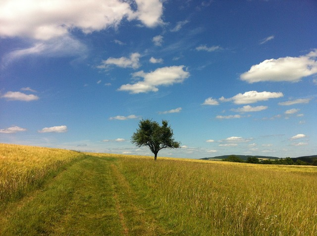 Clouds summer tree, nature landscapes.