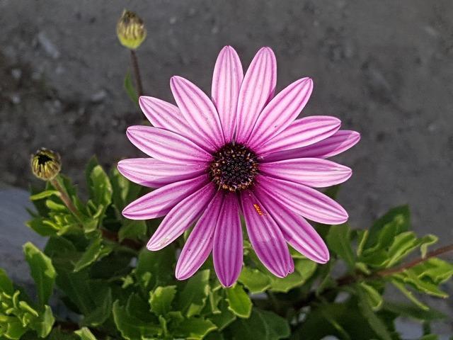 Cluster flowers little flower, nature landscapes.