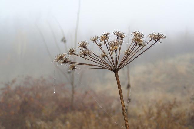 Cobweb drops rosa, nature landscapes.