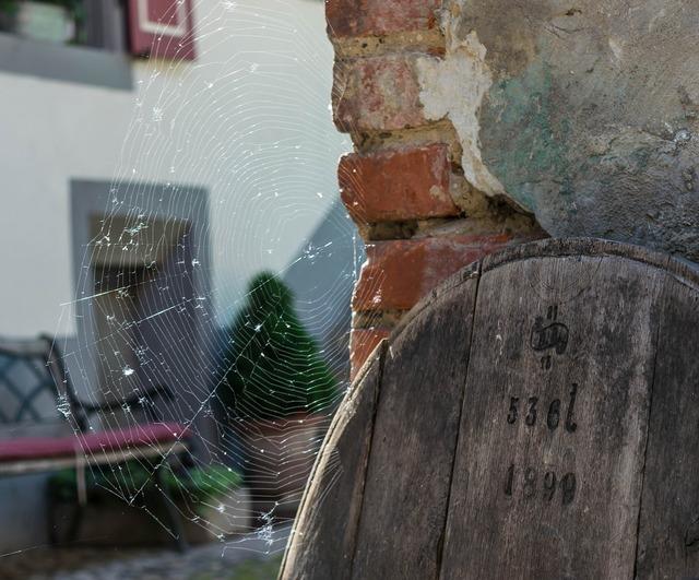 Cobweb network spider.