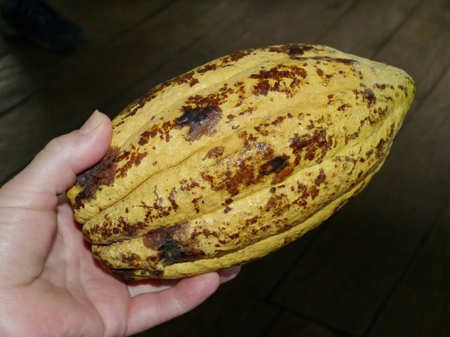 Cocoa bean cacao cocoa, food drink.