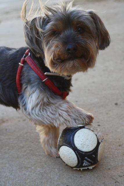 Coconut dog pet, animals.