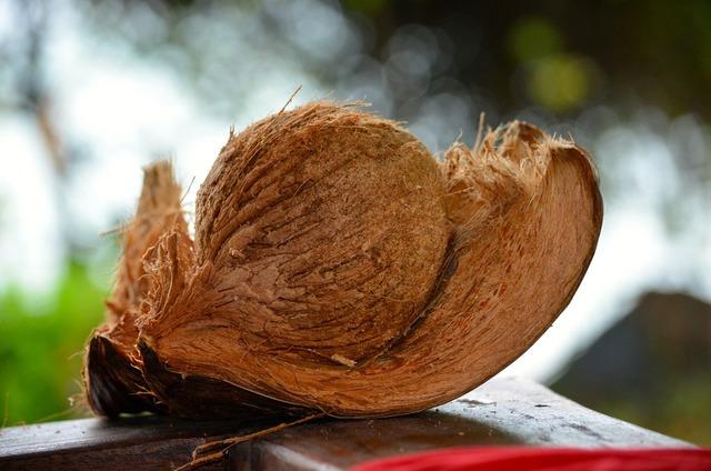 Coconut paradis thailand.