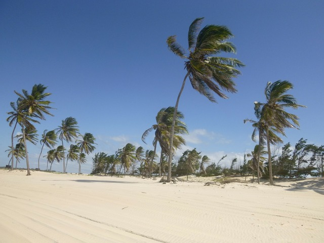 Coconut trees wind sand, travel vacation.