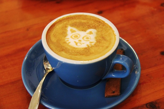 Coffee cafe cat, animals.