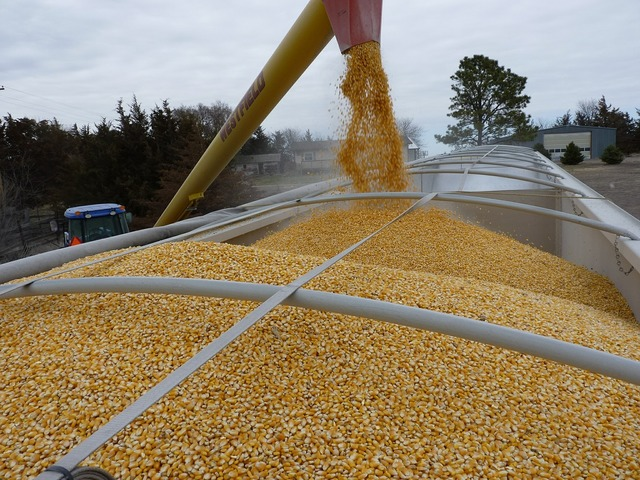 Corn agriculture loading, transportation traffic.