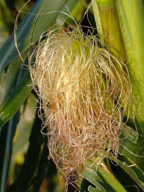 Corn hair style.