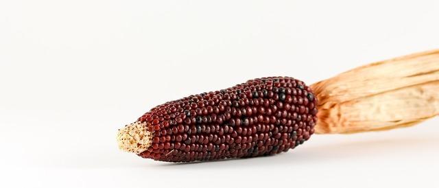 Corn ornamental corn cereals, nature landscapes.