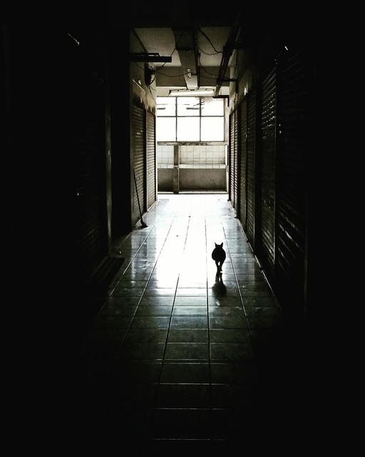 Corridor dark cat, animals.