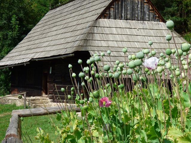 Cottage slovakia summer.