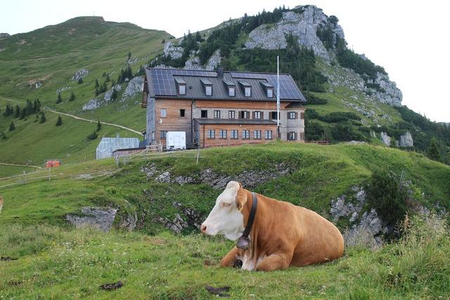 Cow rotwandhaus mountains.