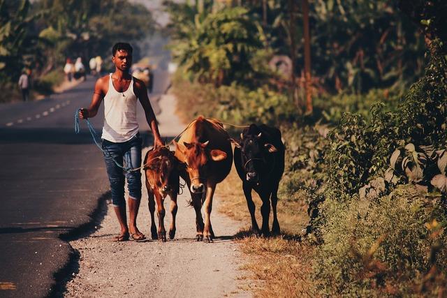 Cow village rural, industry craft.