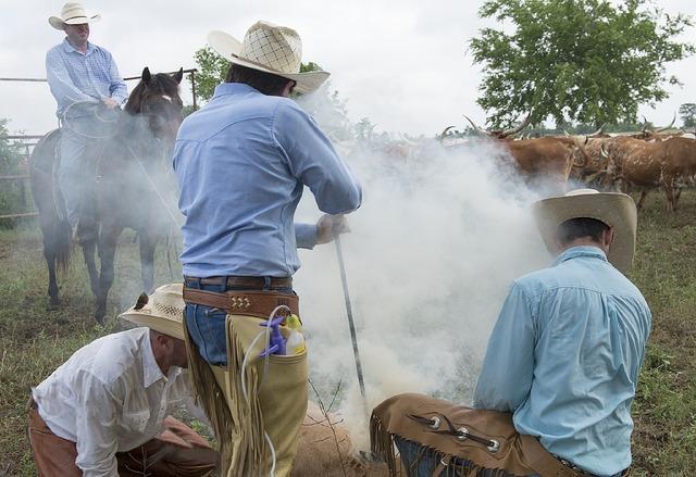 Cowboys branding heifer.