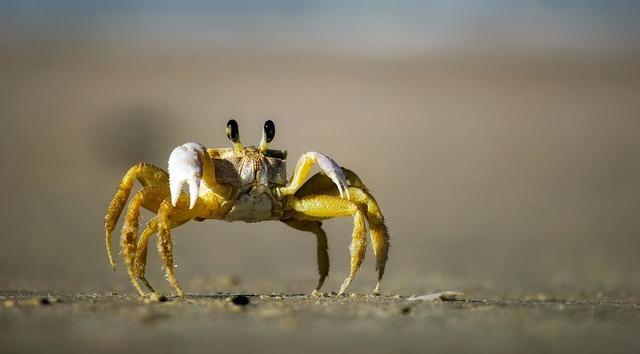 Crab beach sand, travel vacation.