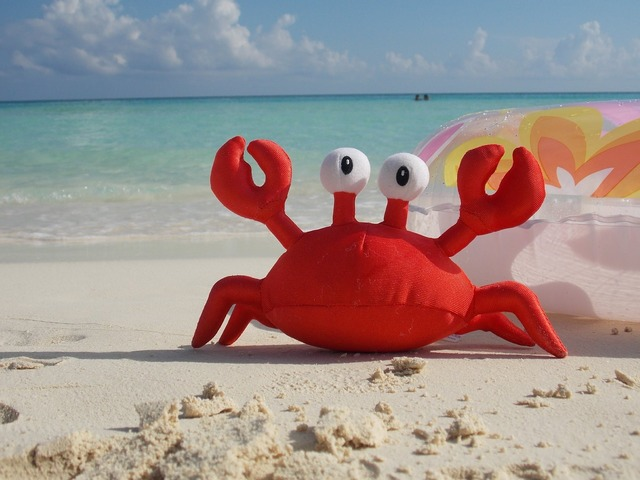 Crab beach seafood, travel vacation.