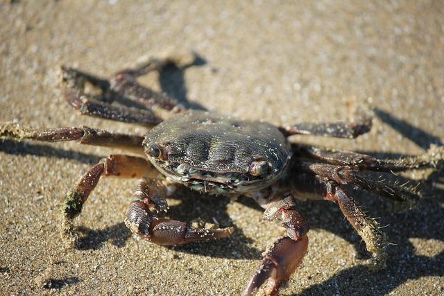 Crab sand beach, travel vacation.