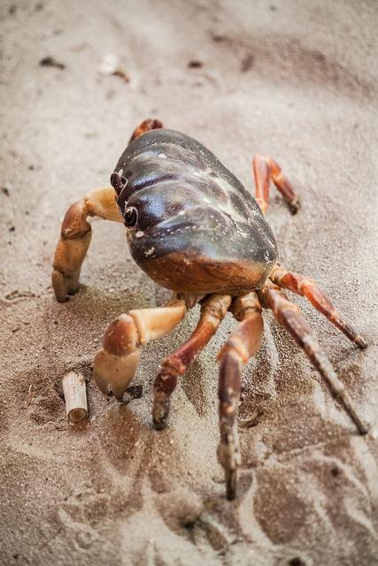 Crab sea life crustacean, travel vacation.
