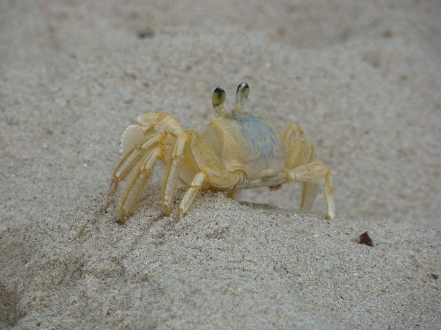 Crab siri beach, travel vacation.
