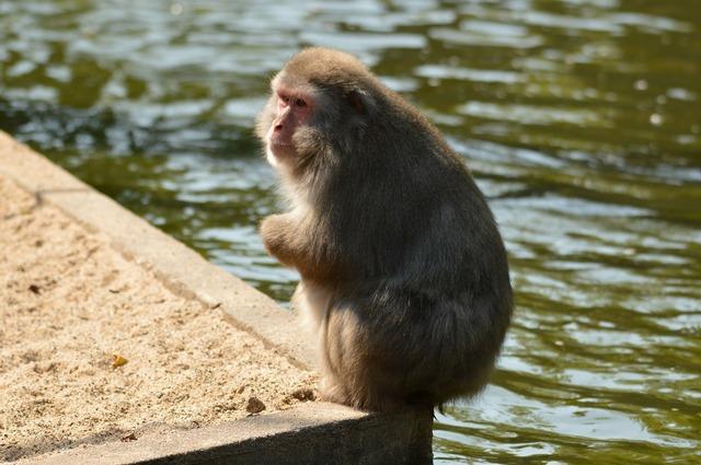 Crackers monkey business zoo, animals.