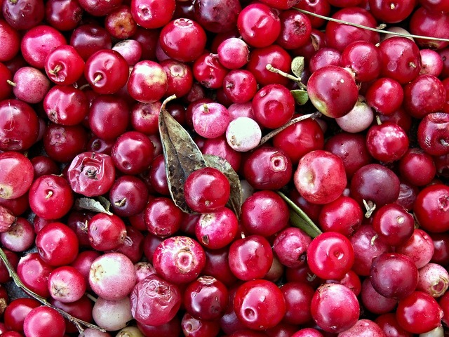 Cranberries black berry forest fruit.