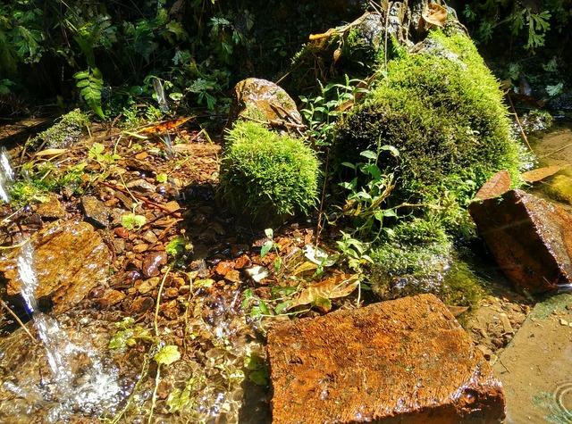 Creek moss running water.