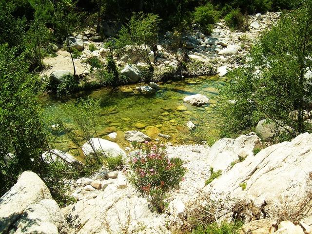Creek transparent water green.