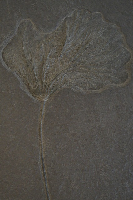 Crinoid fossil fossilized, science technology.