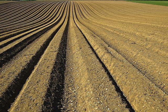 Crop furrows soil.