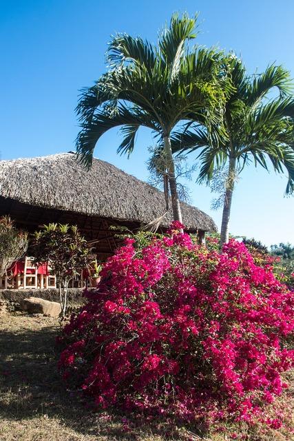 Cuba palm trees bush.
