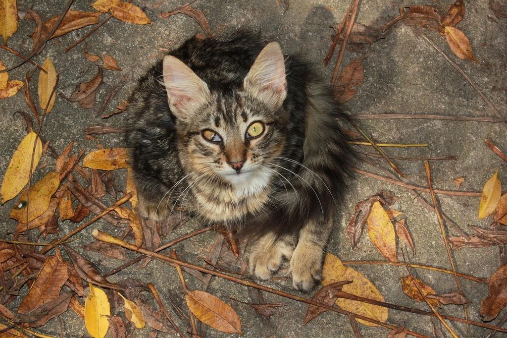 Curious looks cat, animals.
