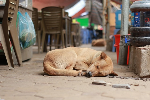Cute dog sleeping dog pet, animals.