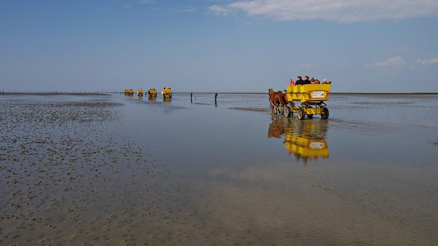 Cuxhaven wadden sea ebb, travel vacation.