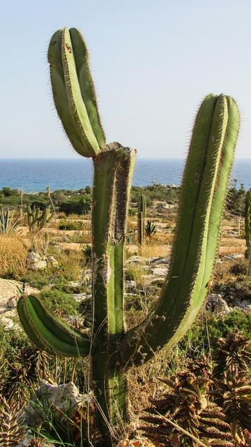 Cyprus ayia napa cactus park, nature landscapes.