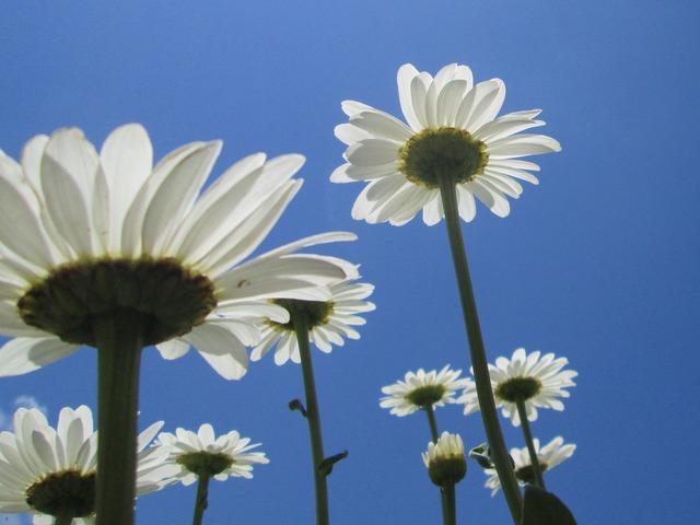 Dailies flowers summer.