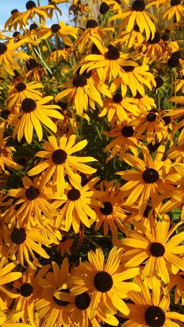 Daisy daisies orange, nature landscapes.