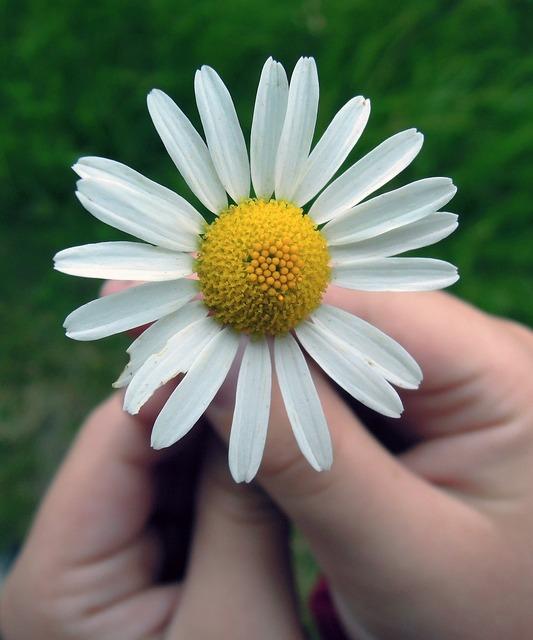 Daisy flower hands.