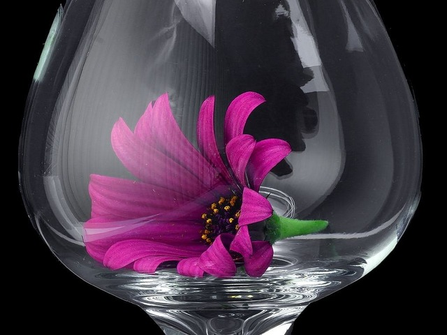 Daisy glass flower, nature landscapes.