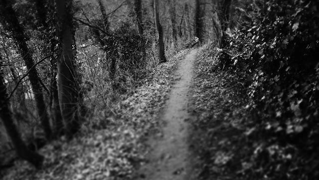 Dark path path woods, nature landscapes.
