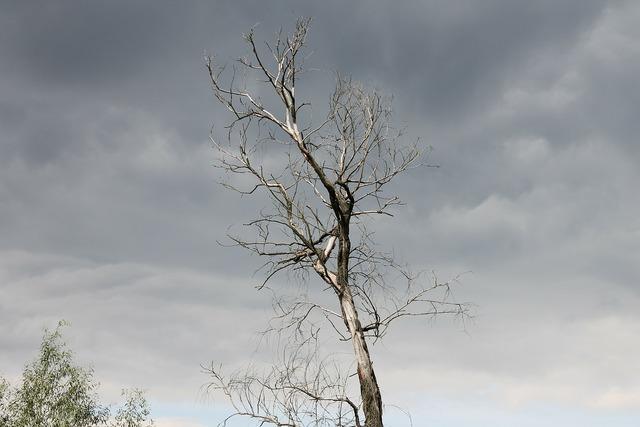 Dark tree sky, nature landscapes.