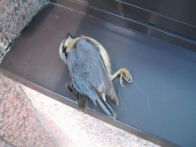 Dead bird bird dead, animals.