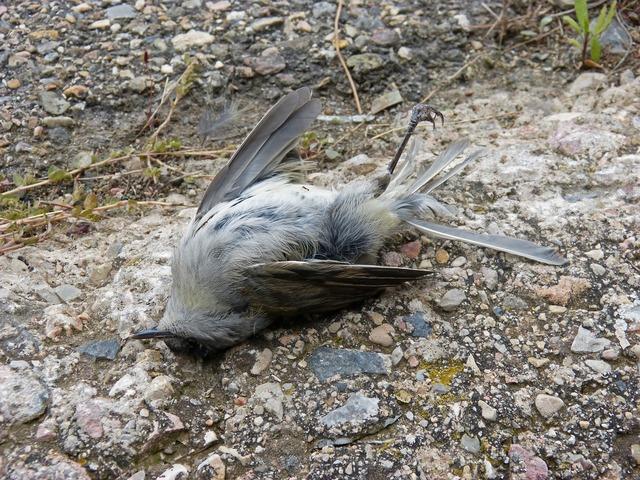 Dead bird symbol metaphor.