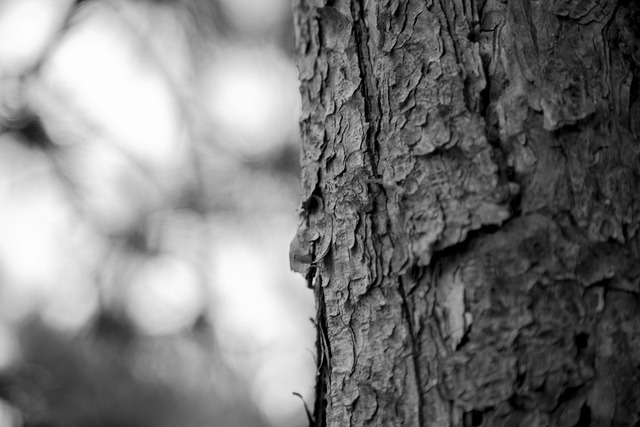 Dead wood era memories in my eyes, nature landscapes.