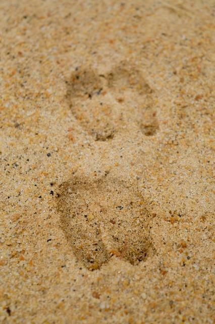 Deer tracks sand deer, animals.