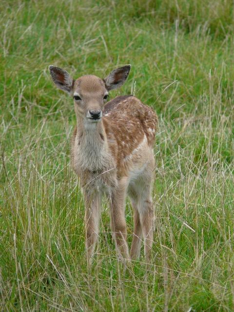 Deer young animal nice, animals.