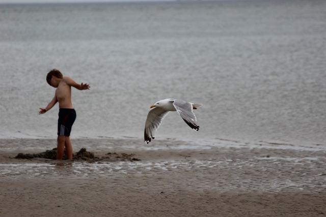 Denmark blavand beach, travel vacation.