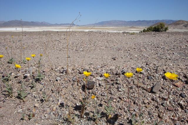 Desert flowers desert flowers.