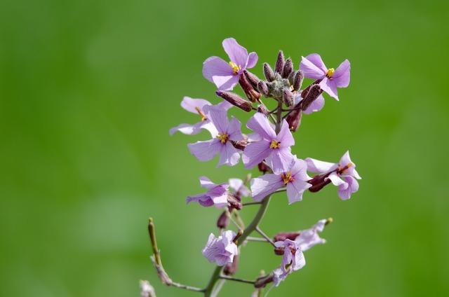 Desert lavender flowers, nature landscapes.